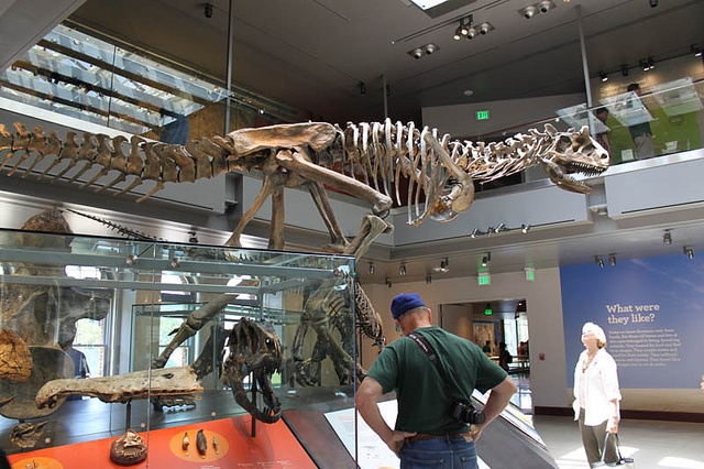 Foyer Museum Utah : Best images about fossil on pinterest museums