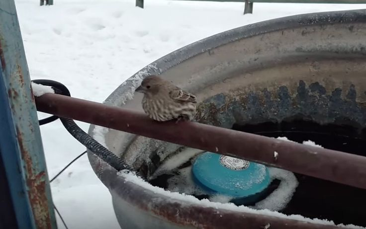 Heart be still. What This Man Did to Rescue a Finch Whose Feet Were Frozen to a Metal Fence Will Warm Your Heart...