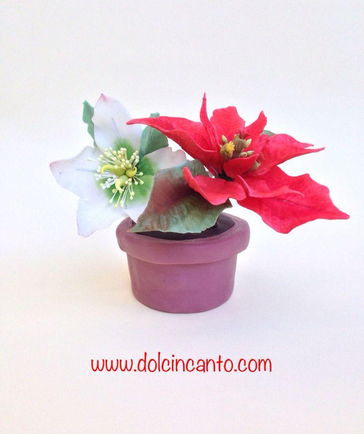 Vasetto/cupcake con Stella di Natale e Rosa d'inverno