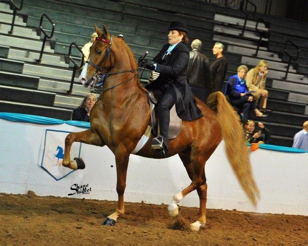 images of parade saddlebreds | The Warden – Saddlebred Horse for Lease and Sale | Bobbin Hollow ...