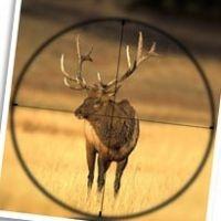 Affordable Elk Hunts Are Still Possible http://www.streetarticles.com/hunting/affordable-elk-hunts-are-still-possible #elkhuntingcolorado