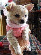 Make a No-Sew Puppy Sweater - Tutorial