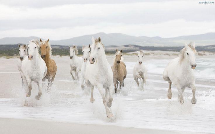 mandria di cavalli - Recherche Google
