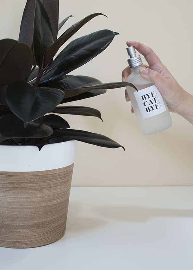 It's a given that every time we write about plants at home, at least one person mentions toxicity and pets —which foliage is safe to ingest, which isn't, and how to get a cat to stop eating their favorites. Turns out there is a DIY solution to keep them away from each other, effectively ending the the war of loyalty between your two loves.