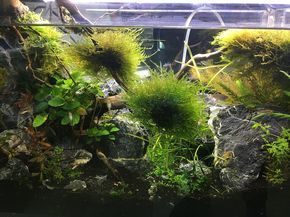 Experts may disagree on the finer points of aquarium maintenance, but any regular routine is better than no maintenance at all.