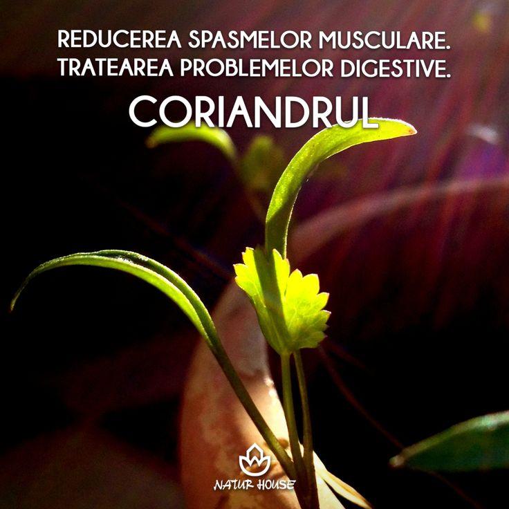 Frunzele de coriandru se folosesc adesea pentru gătit, însă și semințele de coriandru sunt foarte utile sub formă de ceai, deoarece conțin substanțe antibacteriene. Semințele de coriandru ajută la reducerea spasmelor musculare, tratează problemele digestive și infecțiile fungice. #coriandru #sănătate #nutriție
