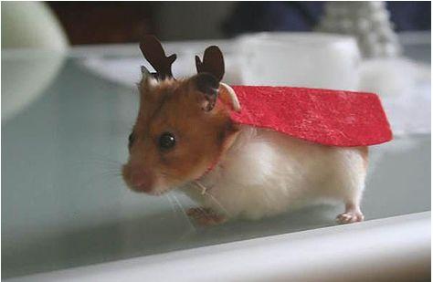 Reindeer superhero hamster?