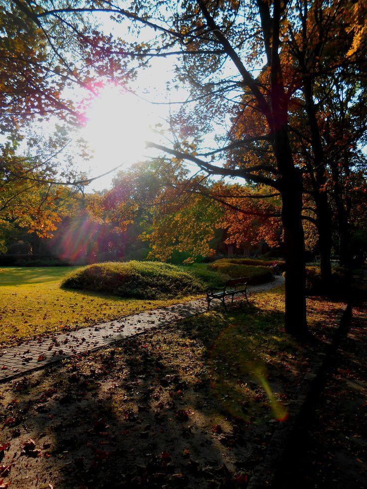 Ősz. Fiuemi úti sírkert. Napsütés.  Autumn.