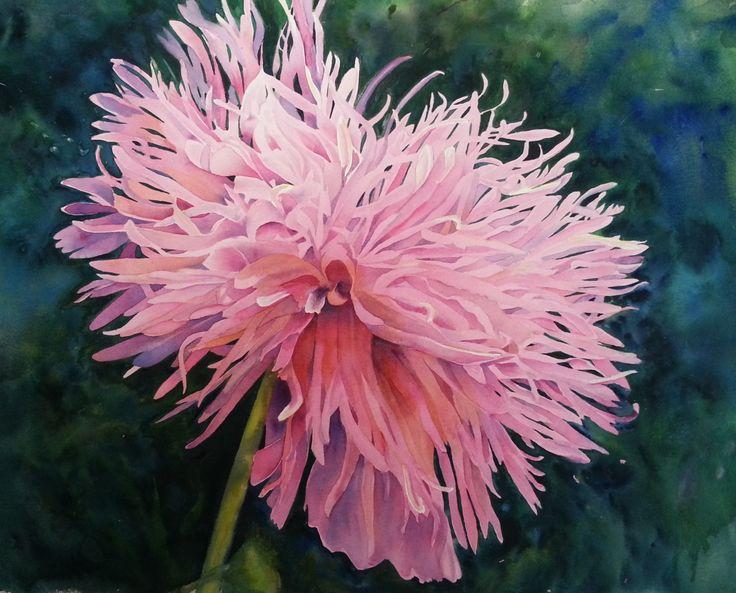 Poppy - Wind Dance