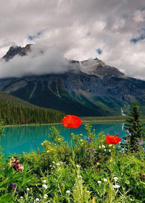 Flores silvestres, Columbia Británica, Canadá