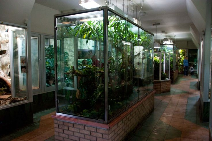 Zoo Reptile Cages For Sale Google Search Greenhouses