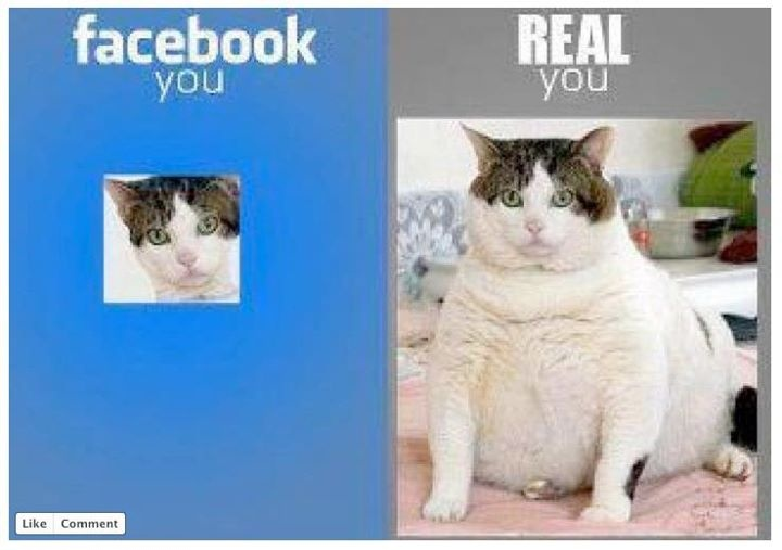 lol: Profile Pics, Funny Pictures, Funny Cat, Fat Cat, Profile Pictures, Funny Stuff, So True, Fatcat, True Stories
