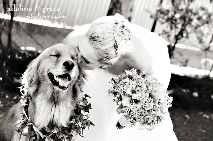 Bride and her dog :). Look at the dogs face. This is precious. I love the idea of a flower wreath around Trudy's neck!