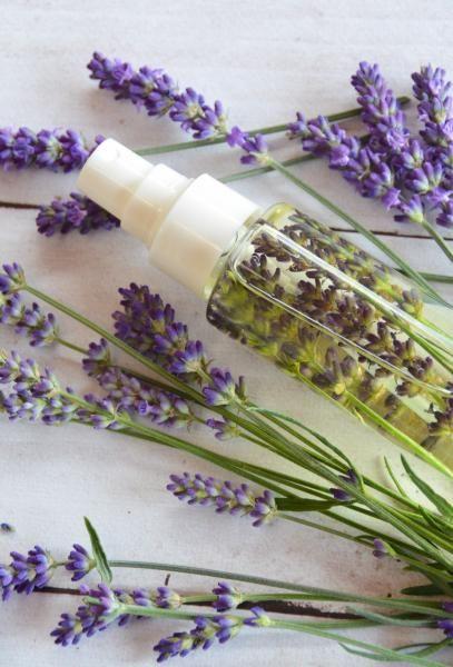 Jaro, léto = hmyz / Použití bylinek / Rady, recepty & bylinkové tipy…