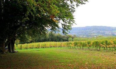 Mumfords Vineyard - a family run business producing top quality English wines