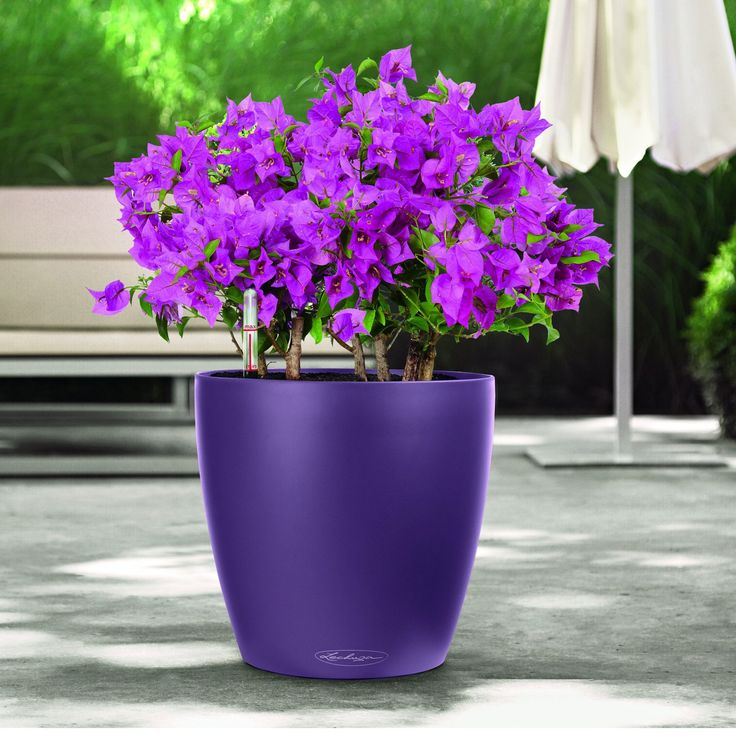 11 best Self Watering Planters images on Pinterest ...