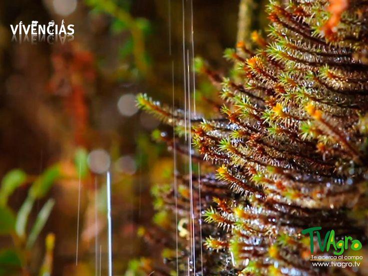 Vivencias: Agua y Uyuca, una Relación Natural.