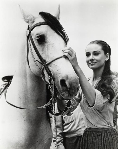 Audrey Hepburn and a white horse