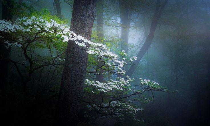 Туманный лес Дейвом B на 500px