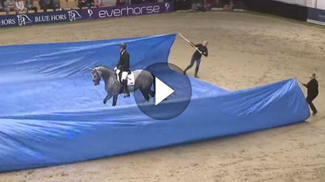 """Wenn du ein Pferd hast, dann weißt du, wie Pferde in der Regel auf """"flatternde"""" Planen oder ähnliches reagieren. Will Rogers und sein Pferd haben dies.."""