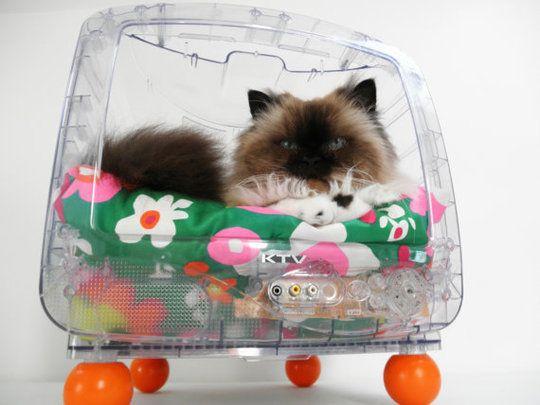 Une télévision recyclé pour le transformer en lit pour chat