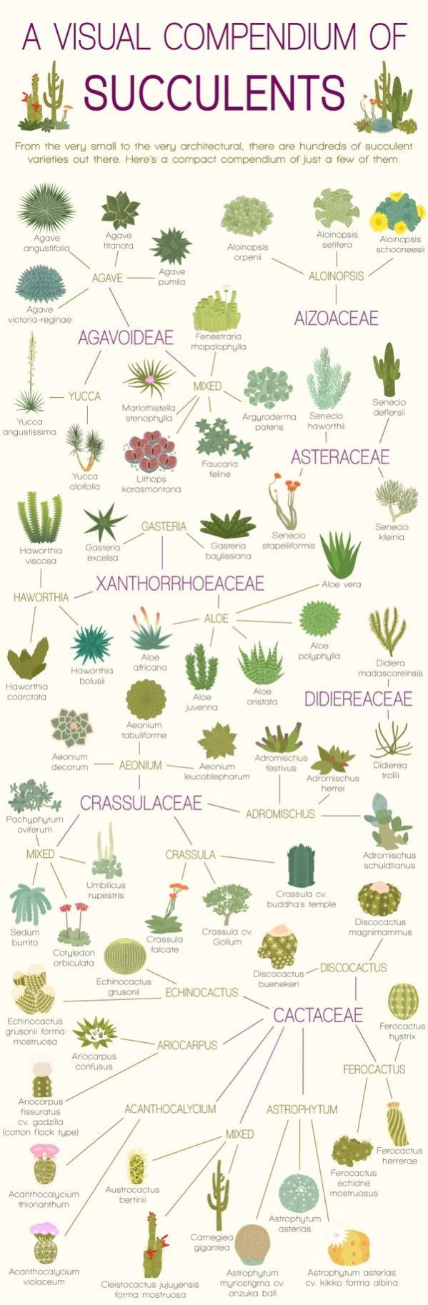 A visual compendium of succulents. If you like the idea of aloe vera but aren't into gardening, check out products via: https://www.facebook.com/groups/gillianajonesforever/