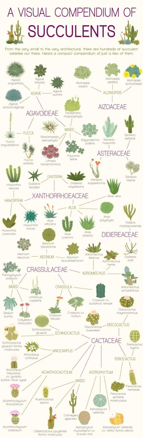 Pflanzenkunde