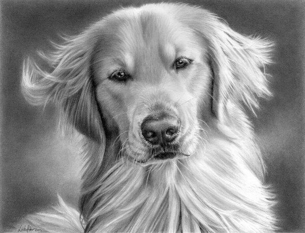 Pencil Drawing of Dog, Amazing Pencil Drawings, http://hative.com/50-amazing-pencil-drawings/,