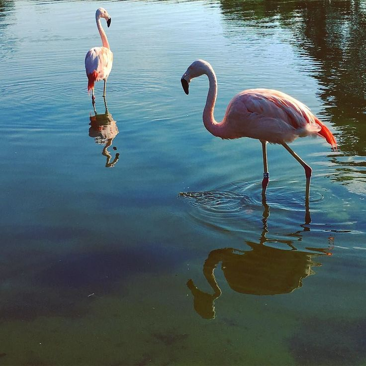 Color your life with #flamingos #westfalenpark #dortmund #nature #blue #pink #landscape #reflection #love