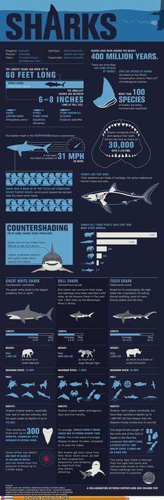 32 best Marine Biologist! images on Pinterest Marine biology - marine biologist job description