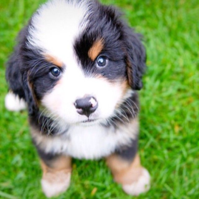 Tag us with #puppiesforall for a chance to be featured! @DogVacay #dog #love…