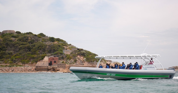 Boat Tours, Dolphins, Seals, Penguins around Port Phillip Heads - South Bay Eco Adventures