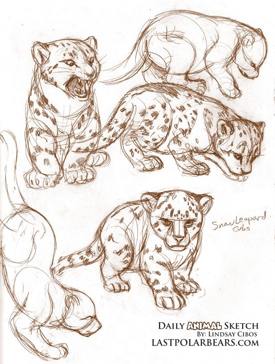 how to draw a leopard face easy