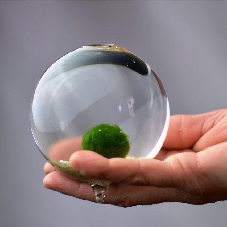 Marimo Terrarium // Japanese Moss Ball Aquarium // Miniature Footed Bud  Vase Container // Home Decor // Office Gift