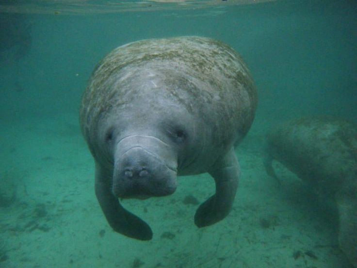 18 Facts To Help You Appreciate Manatees