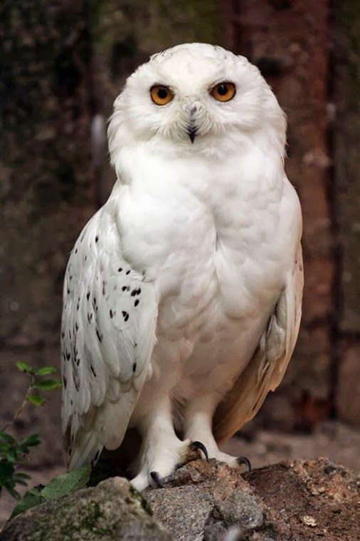 164 best images about julie landry on pinterest sexy for Do owls eat fish