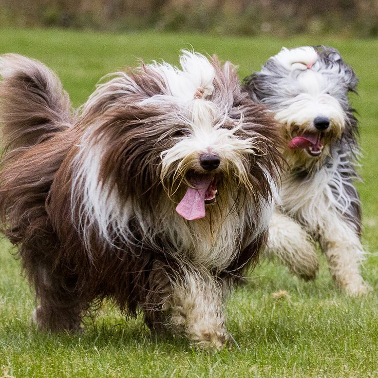 The 10 Most Expensive Dog Breeds
