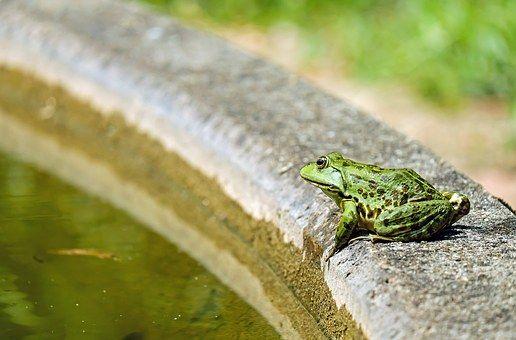Żaba, Woda Żaba, Zwierząt, Zielony