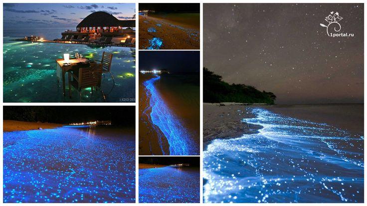 Планктон выброшенный на пляжи острова Ваадху (Мальдивы) окрашивает берега тысячами огней. Свечение объясняется биолюминесценцией — химическими процессами в организме животных, при которых освобождающаяся энергия выделяется в форме света. Голубые светящиеся волны словно отражают звезды в небе над Мальдивами!!!
