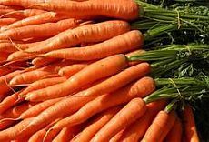 Выращивание моркови и уход за ней | Дача - впрок