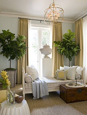 fig Trees: Living Rooms, Lights Fixtures, Blue Wall, Wall Color, Fiddleleaf, Gold Curtains, Figs Trees, Leaves, Fiddle Leaf Figs