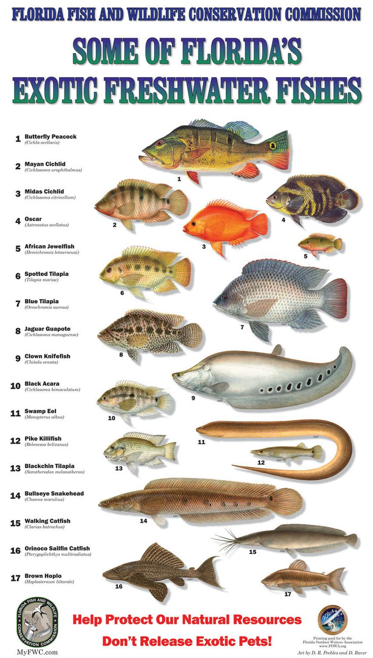 Freshwater fish chart florida measuring salt water for Florida freshwater fishing license