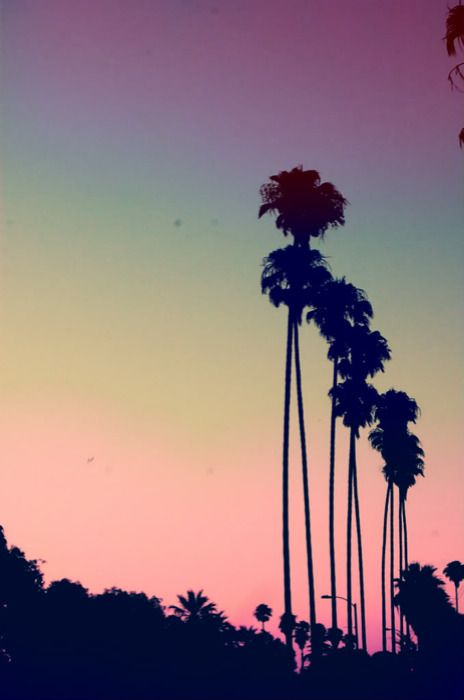 palm tree sunset--beautiful color pallet, we are inspired by elements of nature too