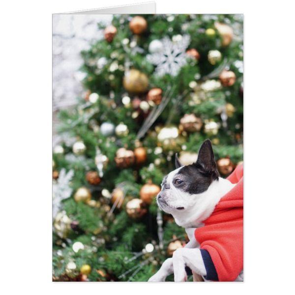 Boston Terrier Pug Dog Christmas Card #cards #christmascard #holiday