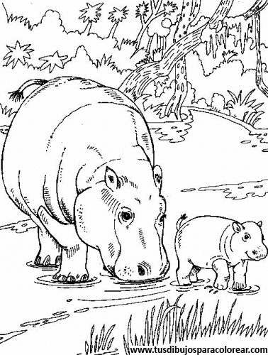find this pin and more on dibujos de animales para colorear hippo and her calf color page