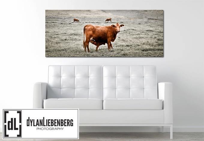 Midlands Cows