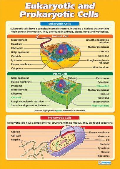 Eukaryotic and Prokaryotic Cells | Science Educational School Posters: