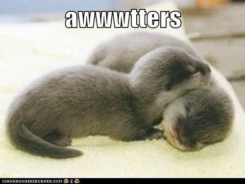 How Cute!!! For me, few things are as adorable as baby otters.