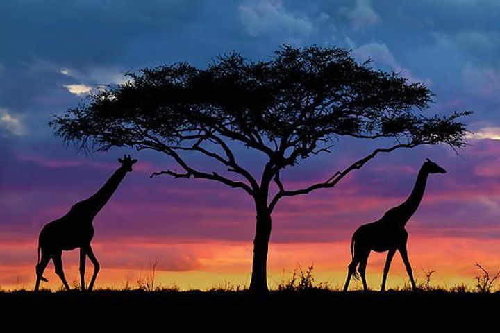 épinglé par ❃❀CM❁✿セレンゲティ国立公園(Serengeti National Park)