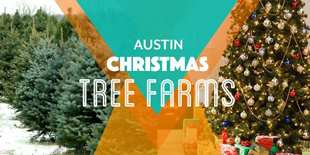 Ultimate Guide - Christmas Tree Farms in Austin | Guide to Austin ...